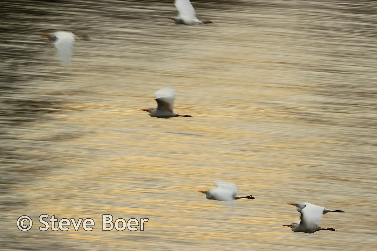 Birds in flight over the Zambezi river
