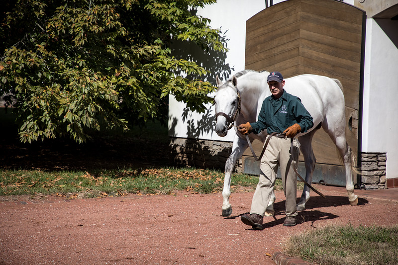 Anchor Down at Gainesway