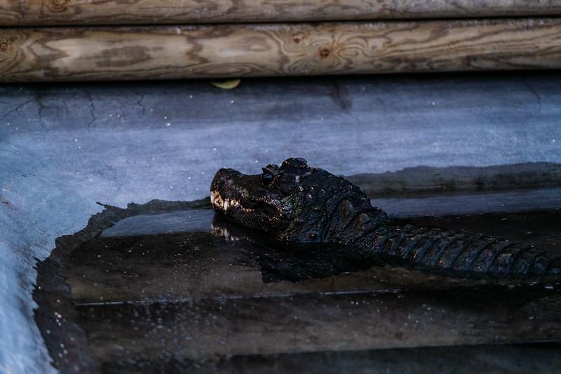 Tonis Zoo-0575.jpg