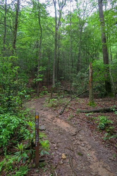 Explorer Loop Trail -- 2,420'