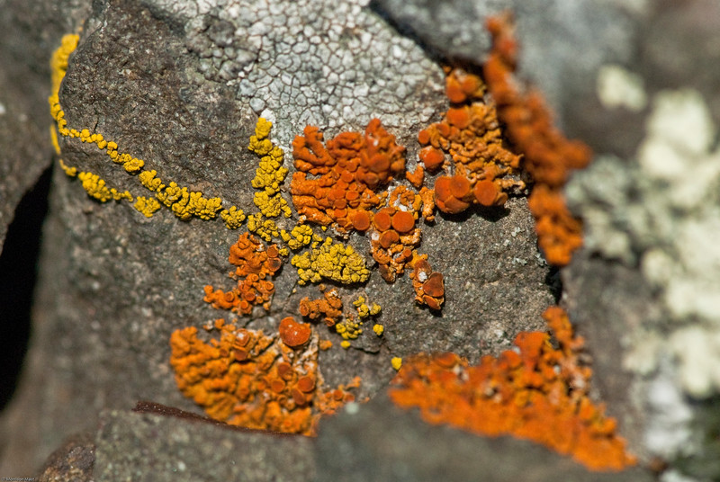 Bozeman Lichens-21.jpg