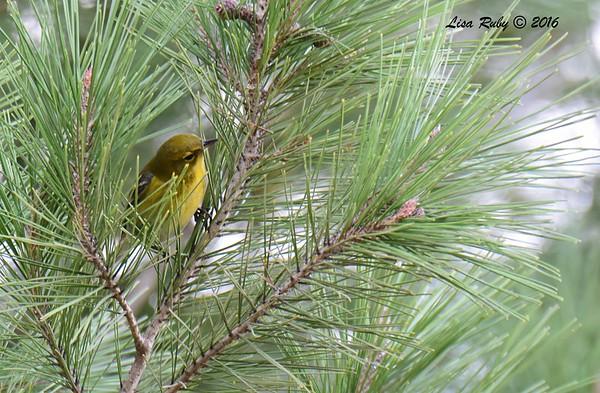 NestorPark_TijuanaEstuary_BirdButterflyGarden 11/13/2016