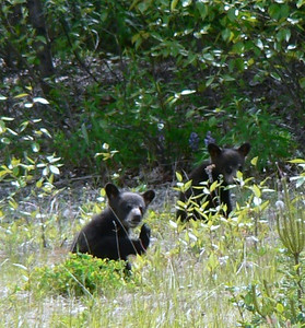Two Thumpers and a Twin:  North Carolina to Alaska 2008_06_25