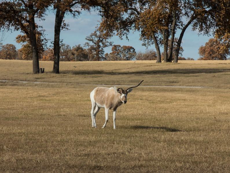 Ranch010115_3.JPG