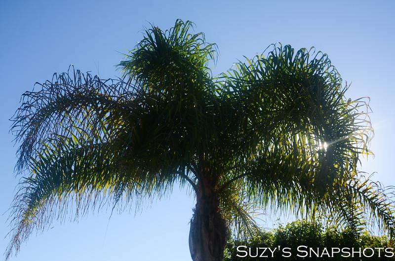 SuzysSnapshots_Mikayla-3 (2).jpg