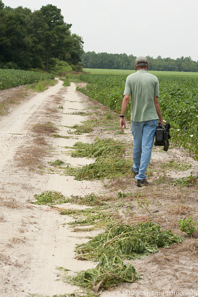 Our first glimpse of the Pig Weed that had been pulled from along the road.