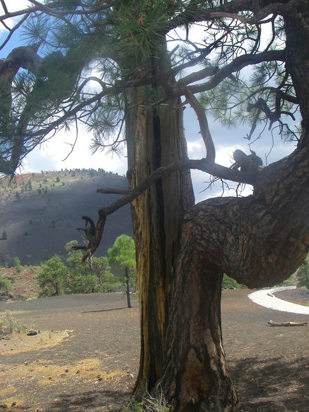 Trees are fighting to survive in severe conditions…
