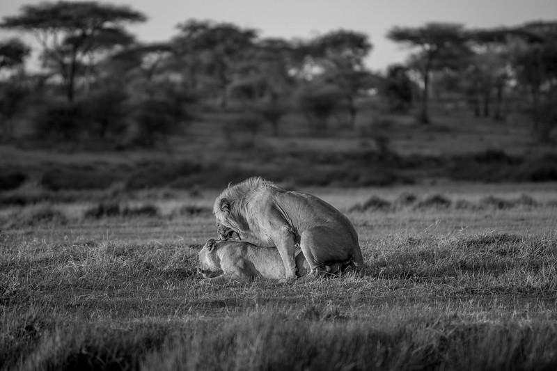 Tanzania_Feb_2018-224.jpg