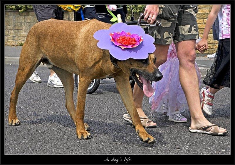 A dogs life (80230943).jpg