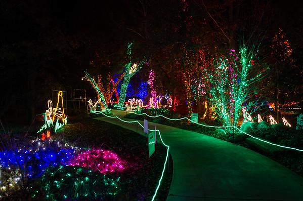 CALM Zoo Christmas Lights