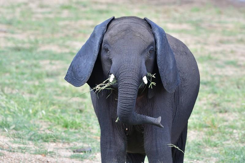 Elephants113.jpg