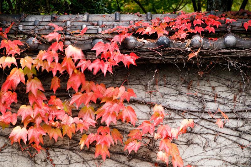 Japan_2010_NAT0559.jpg