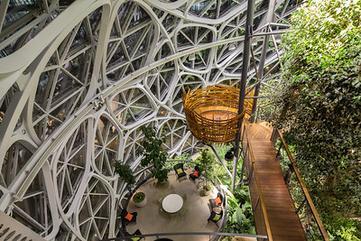 R. I. S. D. at the Amazon Spheres 1-23-19