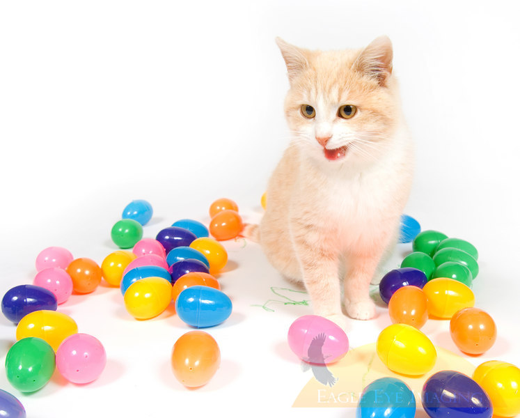 A yellow cat plays amongst an assortment of yellow easter eggs