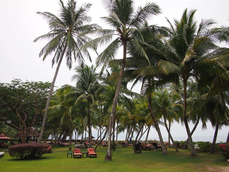 P4064653-coconut-trees-garden.JPG