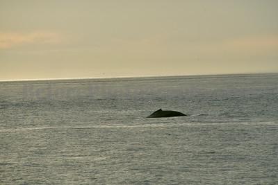 Victoria Island, Canada