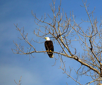 Eagles & River Birds
