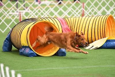 Dauphin Dog Trainng Club AKC Agility Trial October 10-21