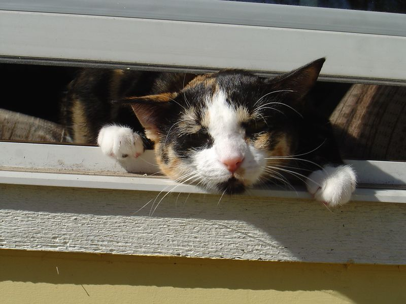 Abby trying to escape through the window.  She actually made it.