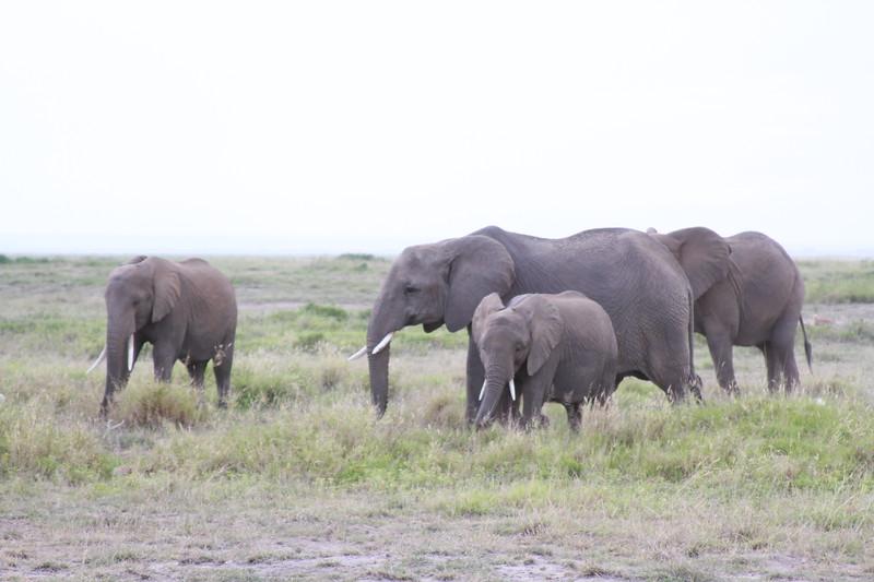 Kenya 2019 #2 456.JPG