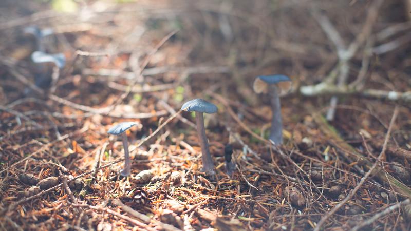 150913_Nikki_Forest_5322.jpg