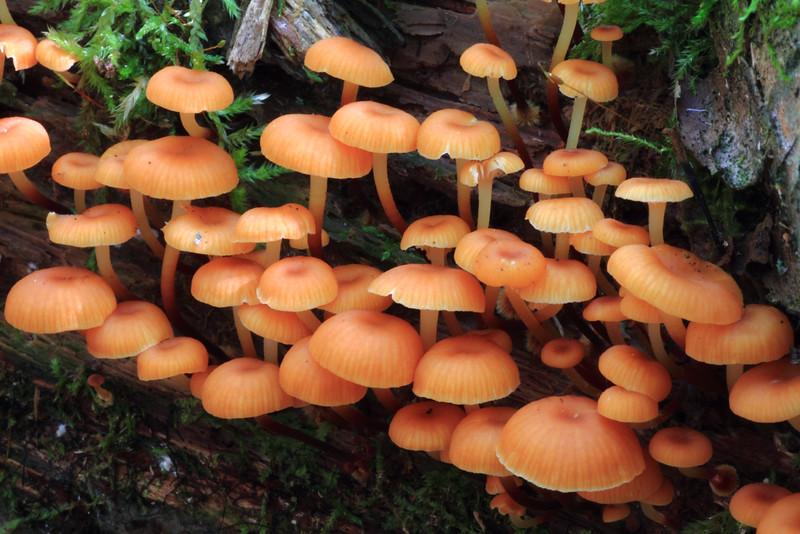 Mushrooms- Mallard Lake
