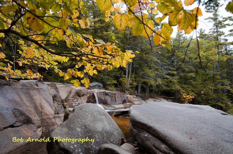 NH Foliage-19.jpg