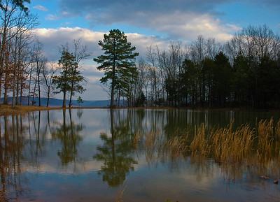 Quiet reflections