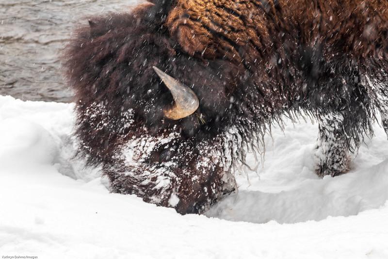 Yellowstone in winter-0065sm.jpg