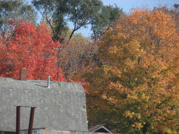 Fall pics 2008 039.jpg