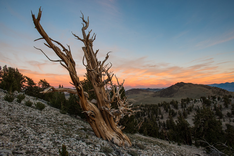 Eastern Sierras (2015-07-27)