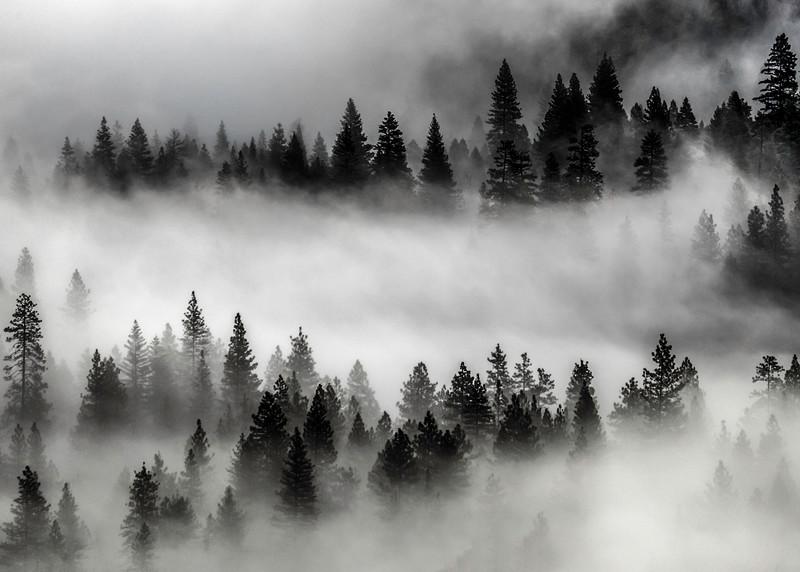 Tunnelview Fog .jpg
