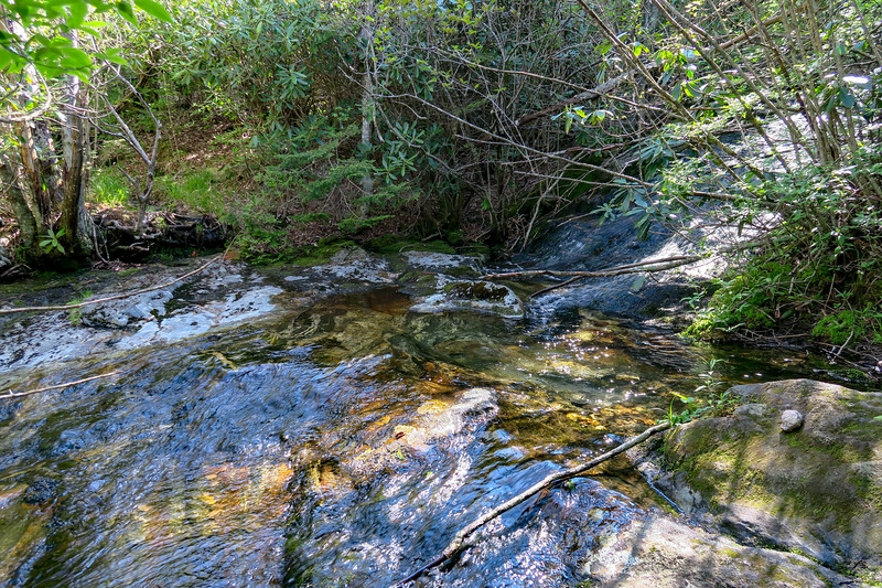 Bubbling Spring Branch Tributary -- 5,300'