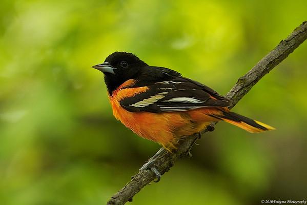 2010 Backyard Birds