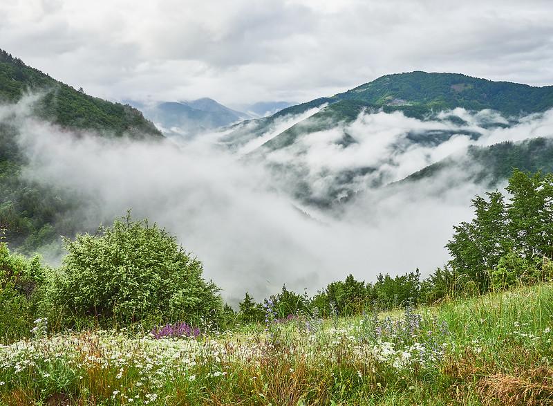 Mountain flower meadows