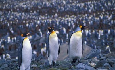2011 12-31 Penguins