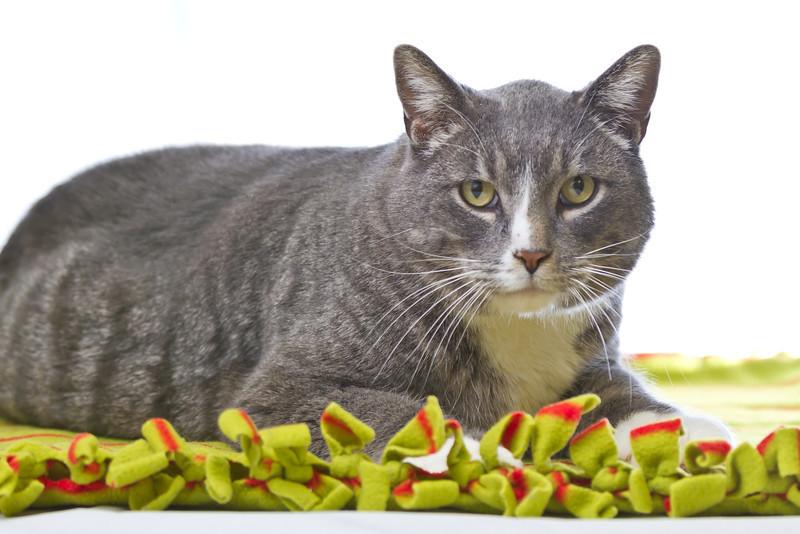 1202_Cats_028.jpg