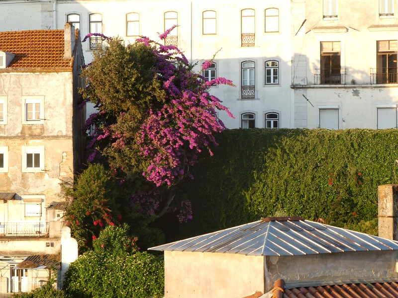 Lisbon August 19 -85.jpg