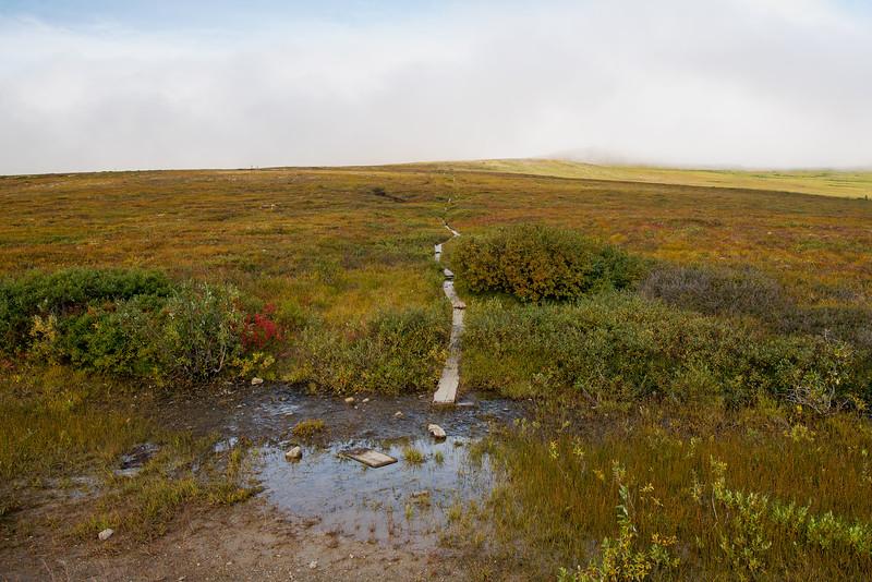 Loose-Loose Trail