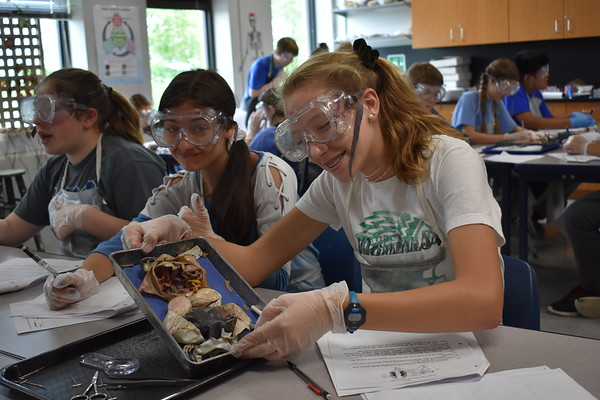 7th Grade Frog Dissection