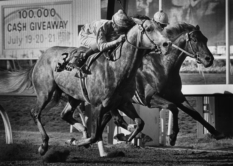 . Go West Young Man (left) and Balzac come down the stretch during the Hollywood Gold Cup. Go West Young Man won by a neck. Eddie Delahoussaye is the jockey on Go West Young Man and Chris McCarron is the jockey on Balzac. Photograph dated: June 23, 1980.   (Los Angeles Public Library)