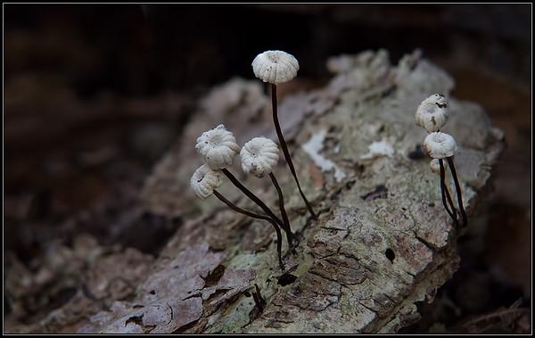 Takruiterje/Twig Parachute