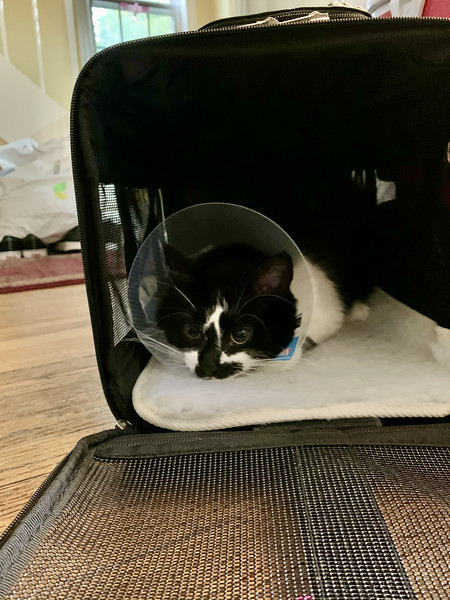 Home after spaying