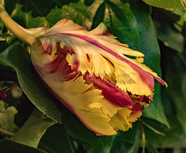 Philadephia Flower Shows