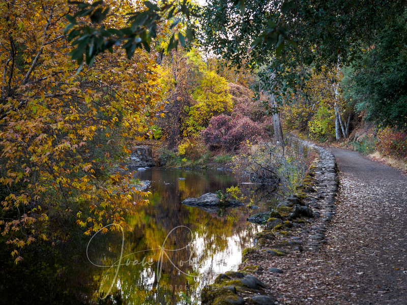 201122-Upper Bidwell Park in Nov-221139.jpg