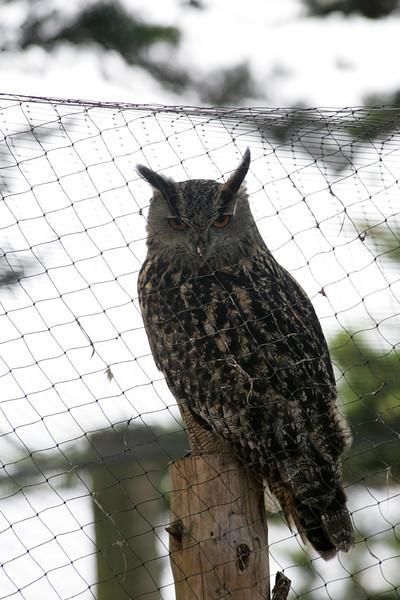 Newquay Zoo 153.jpg