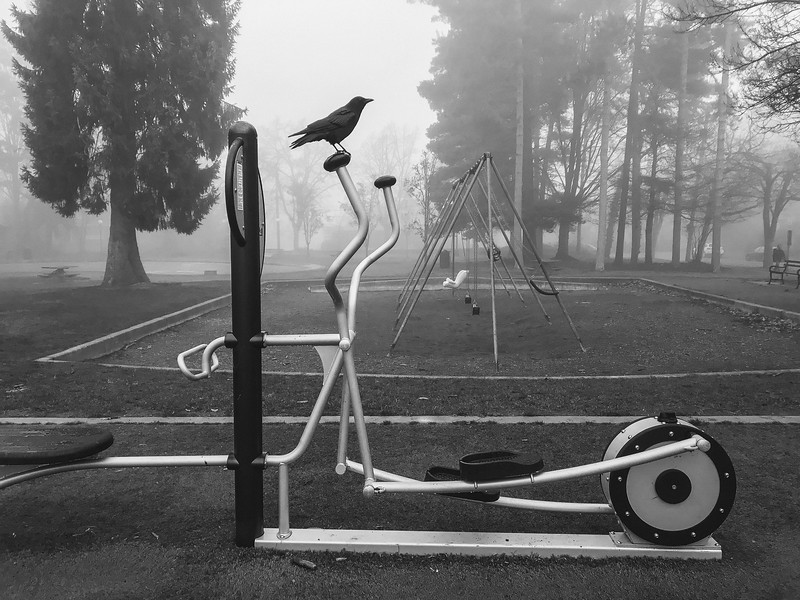 On a foggy morning a crow stands on top of an elliptical exercise machine at Hiawatha Park.