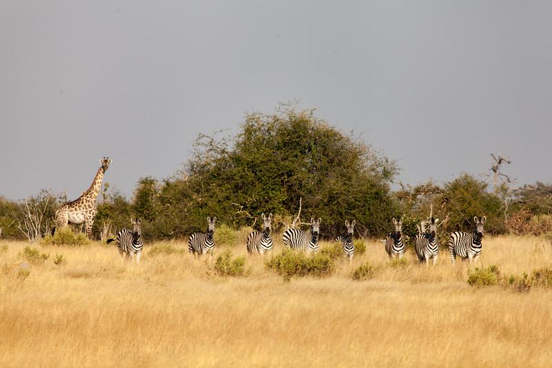 Botswana-30.jpg