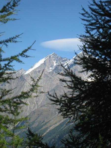 mountain_trees.jpg