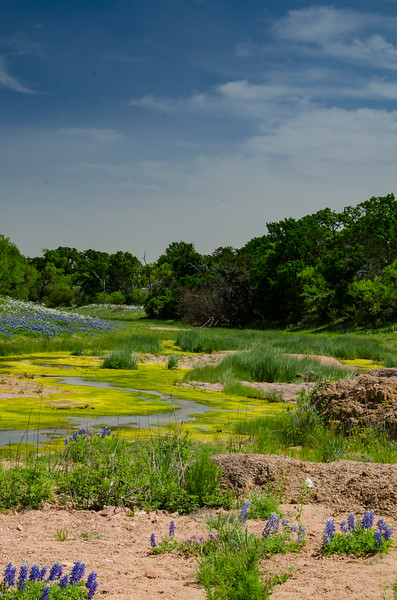 Willow Creek Bluebonnets.jpg